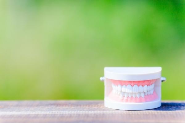 自由が丘の歯医者-三好歯科-自由が丘|歯科医師コラム|『歯を残す』と『歯を治す』は違う?歯科で一番大切なこととは_歯の模型のイメージ画像